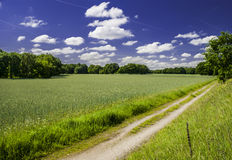 Path Between Fields. Deep blue sky with few clouds - trees left and right and on horizon Royalty Free Stock Photo