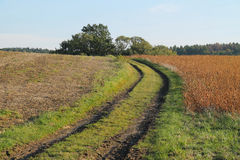 Path in the fields Stock Photography