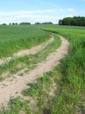 Path in the fields Royalty Free Stock Images