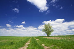 Path in the fields. Rural path in the fields - natural landscape background Royalty Free Stock Photography