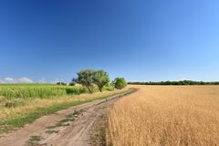 Path among the fields royalty free stock photography