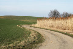 Path in the fields Royalty Free Stock Photography