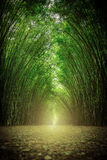 The path flanked by two sides with no bamboo forest Royalty Free Stock Photography