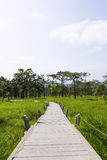 Path in the flowers field. A path in the field of flowers with trees and wild grass at the national park, Thailand Royalty Free Stock Image