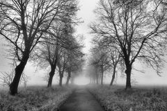 Path with fog Royalty Free Stock Image