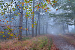 Path in foggy autumn forest Stock Images
