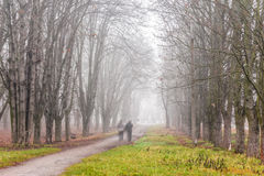 Path through foggy autumn park Stock Image