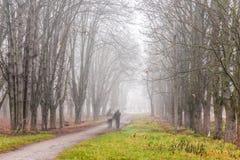 Path through foggy autumn park Stock Image