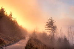 Path. Foggy autumn sunrise from path leading to Clingmans Dome, Great Smoky Mountains National Park, Tennessee, USA Stock Photography