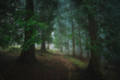 path in foggy dark forest Stock Photo