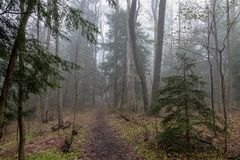 Path through a Foggy Forest in Spring stock image