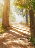 Path in the foggy forest with sunlight Royalty Free Stock Photo