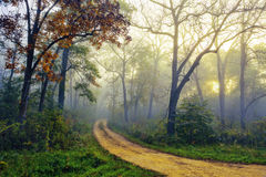 Path through Foggy Forest Woods Royalty Free Stock Images