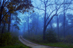 Path through Foggy Forest Woods Royalty Free Stock Photography