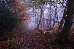 Path through foggy misty Autumn forest Royalty Free Stock Images