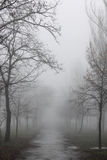 Path at foggy weather Royalty Free Stock Image