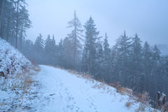 Path in foggy winter Harz mountains Royalty Free Stock Photography