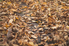 Path foliage Royalty Free Stock Photography