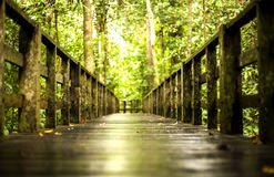 Path... Foot path towards conservation orang utan in sabah Stock Images