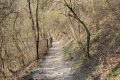 Path in the fores Royalty Free Stock Photography
