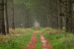 Path in the fores Stock Images