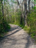 Path in the Forest. A walking path in a heavily wooded area Stock Photos
