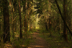 Path in forest Stock Images