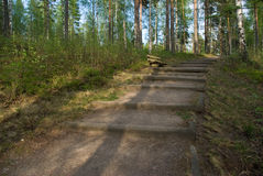 Path in forest. Path in evening mixed forest. Imatra, Finland Stock Photo