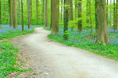 Path through forest Royalty Free Stock Photos
