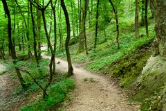 Path in a forest Royalty Free Stock Photos