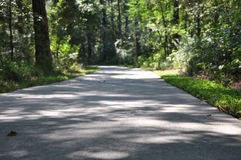 Path through the forest. A cement path curving through the dense forest Royalty Free Stock Photography