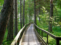 Path through the forest. A pathway through the Store Mosse  Natural Reserve in Gnosjö, Sweden Royalty Free Stock Image