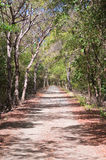 Path through the forest. Path through a tropical forest in Cabo Rojo, Puerto Rico Stock Photography