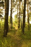 Path through a forest Stock Images