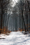 A path in a forest. At winter royalty free stock photos