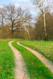 Path in forest Royalty Free Stock Photo