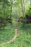 Path in the forest Royalty Free Stock Photo