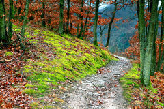 Path in the forest Royalty Free Stock Photography