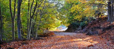Path in the forest. A path in the forest during autumn Stock Images