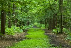 Path through forest Stock Photography