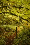 A path in the forest. Old forest growth - cycles of rebirth and decay in a natural environment stock photography