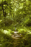Path in forest. Narrow path in forest used by tourist Royalty Free Stock Photography