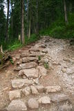 Path into forest. A steep path into forest up a mountain in Zakopane national park Poland stock photography
