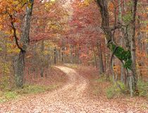 Path in the Forest Stock Image