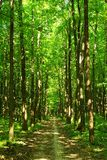 Path in forest Stock Photography