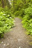 Path into the Forest Stock Photography