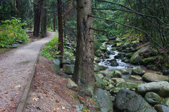 Path In The Forest Along Lomnica River In Karpacz Stock Photography
