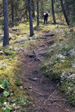 Path in the forest, Altai mountains, Russia Royalty Free Stock Photos