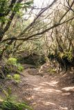 Path in the forest of Anaga. On the island of Tenerife, Canary Islands Spain. It´s a vertical picture Royalty Free Stock Photography