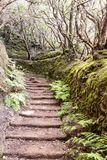 Path in the forest of Anaga. On the island of Tenerife, Canary Islands Spain. It´s a vertical picture Stock Photography